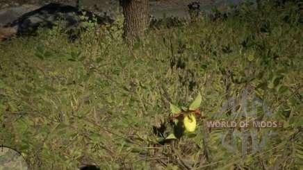 Орхидея Жёлтый башмачок в RDR 2