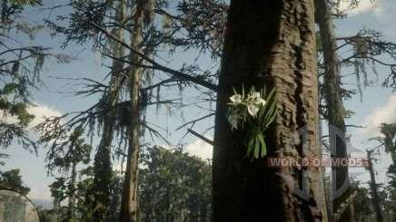 Орхидея Леди ночи в RDR 2