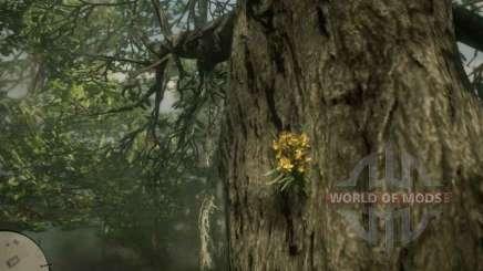 Орхидея Сигара в RDR 2