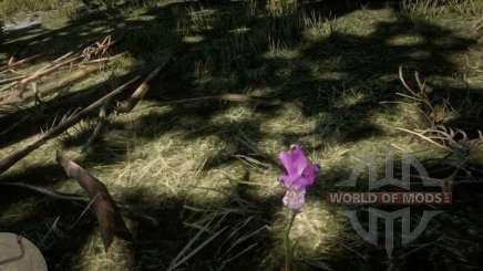 Орхидея Пасть дракона в RDR 2
