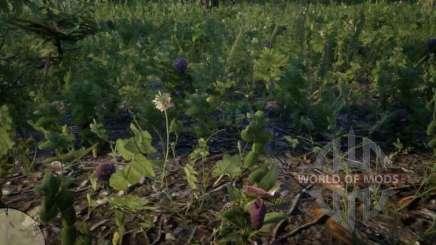 Орхидея Венерин башмачок в RDR 2