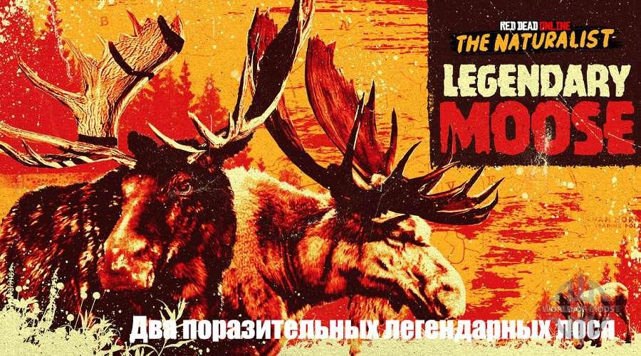 В дикой местности пасутся два легендарных лося